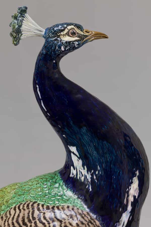 Peacock by Paul Comolera