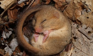 By directly manipulating the brains of sleeping mice, researchers tricked the animals into thinking they had received a reward at a specific place.