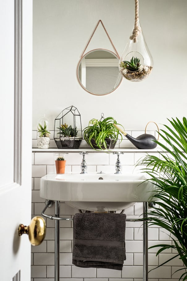 How to make the most of house plants | Life and style | The ... Dead House Plants Room on dead plant cartoon, dead finger plant, dead angel plant, dead flower, dead gardenia plant, dead office plants, dead orchid plant, dischidia plant, dead horse plant, money tree plant, dead rose plant, dead cannabis plant, dead palm plant, dead fern, dead planet, a dead plant, healthy plant dead plant, dead potted plant, dead plants in pots, dead corpse plant,