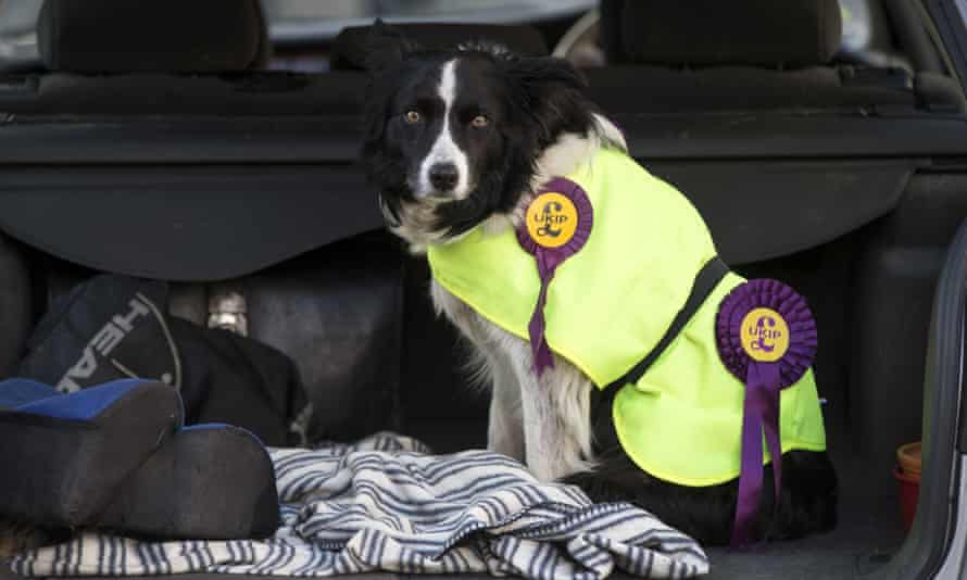 A dog wearing Ukip rosettes in Newark. The bishops say the letter does not tell church members to 'vote for this party or that party'.