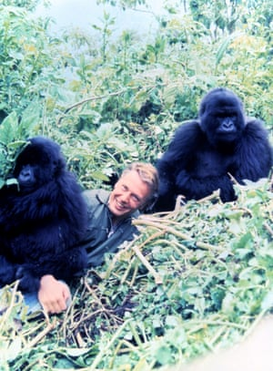David Attenborough with young mountain gorillas during the filming of Life on Earth, 1978.