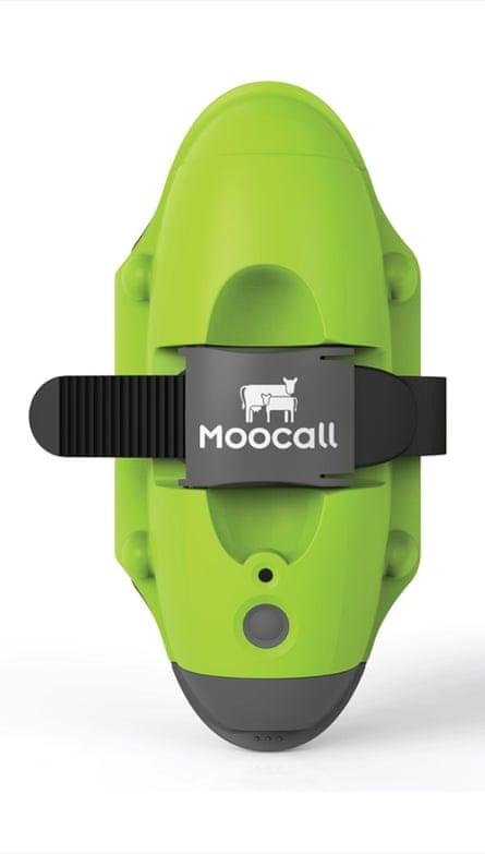 Moocall SMS calving alert sensor