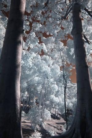 Enchanted Forest, Balboa Park, San Diego, USA.