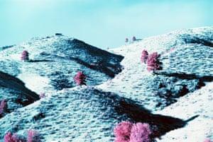Pines on rolling hills, Montana, USA.