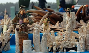 Confiscated ivory in Dongguan, southern Guangdong province, China