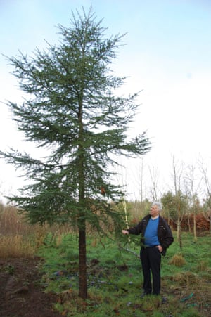 European Tree of the Year 2015 Cedar of Lebanon (Cedrus libani), Ballinderry, Nenagh, Co Tipperary, Irelandnderry, Nenagh, Co Tipperary, Ireland I planted this cedar of Lebanon tree on my 50 acre woodland in memory of my late wife Mary. She was a great support over our 45 years together and she is a great loss in my life. I am now in my 82nd year and when asked if I have any regrets about my life   s work I always say yes, I have two regrets: That I didn   t know more about trees as a teenager, and that I didn   t plant twice as many. It is my firm belief that if young people could get an interest in nature and wildlife they will never be bored. Age: 15 years