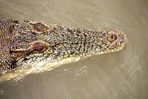 A crocodile on the Darwin River, Northern Territories, Australia