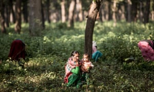 Women clear weeds in the forest