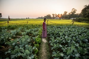 A woman farmer stands in a vegetable field
