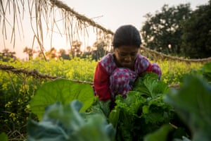 A woman farmer tends her vegetables