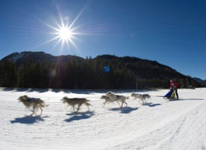 Schamitz, Austria A musher in action during the dog sleigh world championships. The dog sledding world championships runs from 19 February to 22 February