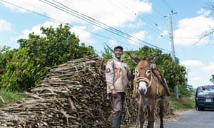 O Brien Auto >> Jamaican farmers face bleak future as EU axes cap on sugar ...