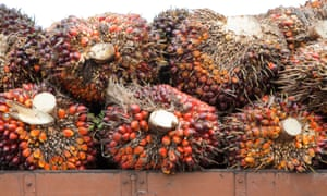 Stack of oil palm fresh fruit bunches on truck