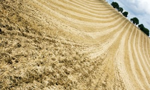 Wheat field in the English countryside after it has been harvested.
