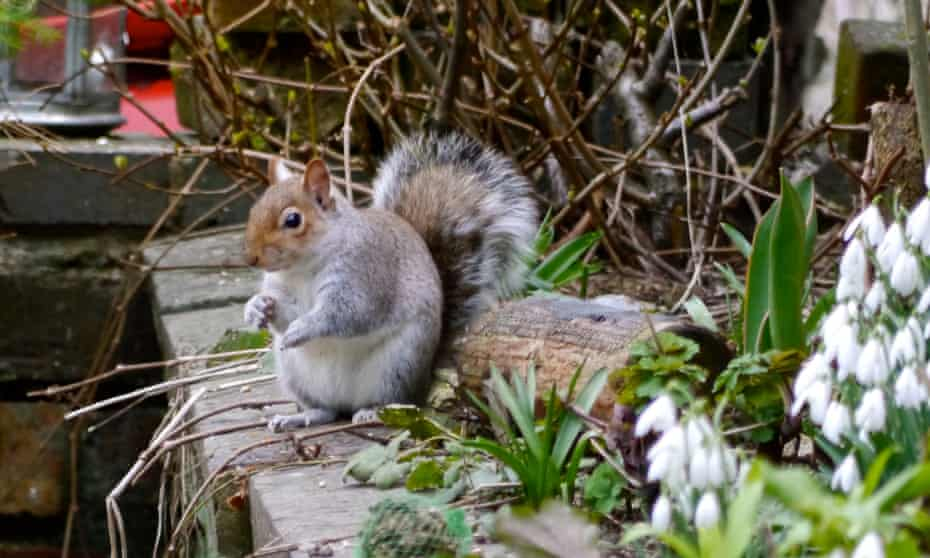 The squirrel flicks her tail like semaphore.
