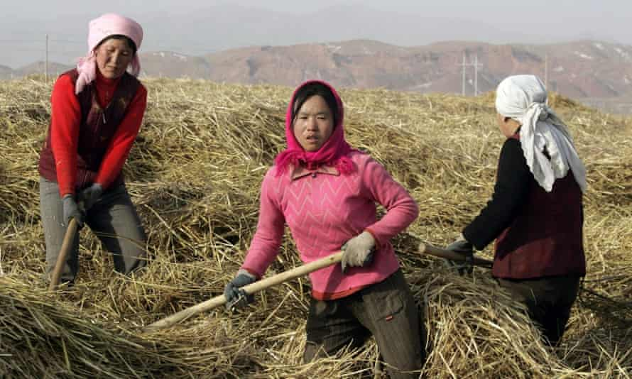 Female farm workers near Zhongning, north-west China. Women make up two-thirds of the rural workforce, but lose out on rights to use land.