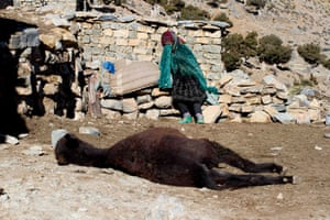 A woman mourns for her donkey after discovering it had died due to ill health