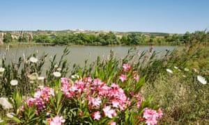 A wetland nature reserve on a green corridor alongside the River Guadiamar, near Sanlucar La Mayor, Andalucia, Spain, 24 May 2011.