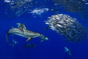 Category 4. International Behaviour For underwater photos of natural marine life behaviour, taken anywhere in the world. WINNER: 'Survival' - Montse Grillo (Spain)