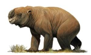 An illustration of the largest known marsupial, Diprotodon optatum, from the pleistocene era.