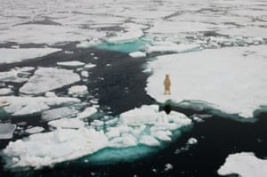 A polar bear surveys the scene in Spitsbergen, northern Norway