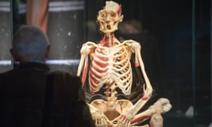 A visitor views a plastinated skeleton at the Body Worlds exhibition in Berlin.