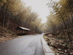 Bamboo Forest in Yixing, China