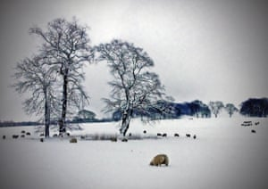 Winter Wonderland Readers Photos Of Snow In The Uk In