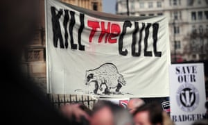 Protesters take part in a demonstration against badger culling outside the Houses of Parliament.