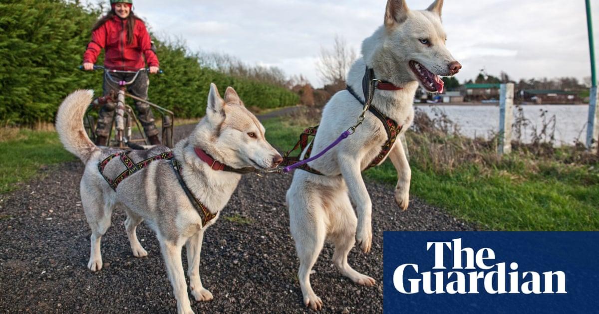 67c4ec31ef Born to run  dog-sledding with huskies in the UK