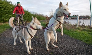 Erica Buist with Husky dogs at Arctic Quest, Tewksbury, Gloucestershire.