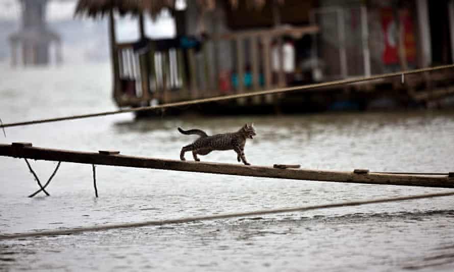 Cat in Hanoi