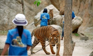 'Tiger Temple', in Thailand's western Kanchanaburi province, has been raided by officials investigating suspected links to wildlife trafficking.