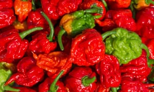Carolina Reaper, the hottest chillies in the world according to Guinness World Records