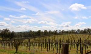 Jasper Hill organic winery.