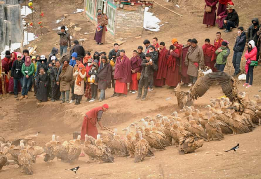This photo taken on April 5, 2013 shows vultures (bottom) gathering to eat as a Tibetan Buddhist monk (bottom C) prepares dead bodies for a sky burial while tourists and monks (back) watch in Seda, in the western region of China's Sichuan province. Sky burial is a funerary practice in China's Tibetan regions where the dead are laid out in a high flat place and ritually cut up, usually by a monk and rogyapas (body-breakers) and then fed to birds of prey, most commonly the Eurasian Griffon vulture.
