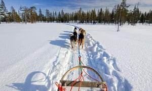 Dog sled team Finland