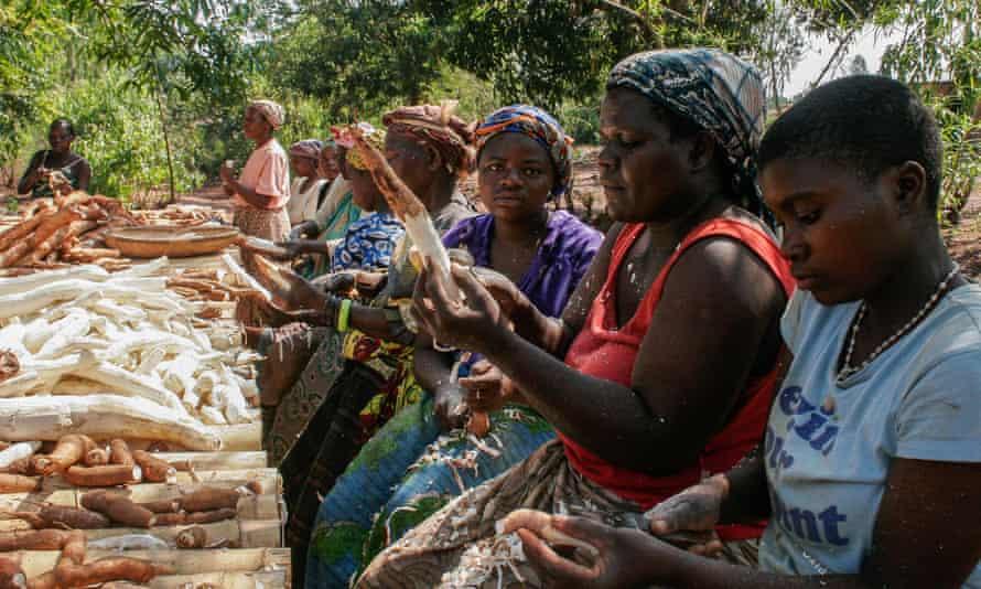 The Tiyamike cassava processing group peeling cassava in Malawi.