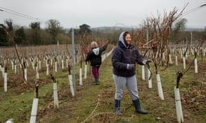 Stopham vineyard, Sussex