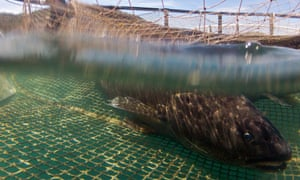 New aquaculture technologies hope to limit the environmental impacts of fish farming