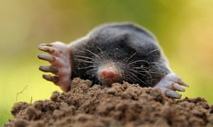 Mole out of hole … science manuscripts should be allowed to escape form the dry earth of their conventional format.