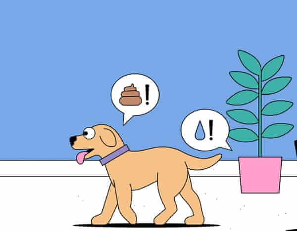 Your dog and pot plant will be part of an IT network. Illustration: Dan Woodger