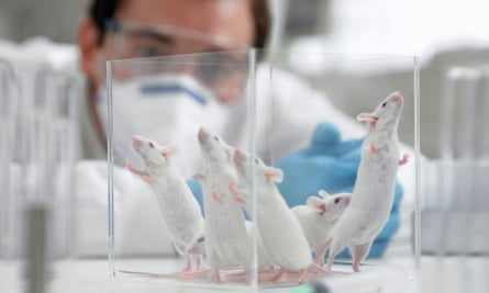 Scientist watching mice in a laboratory.