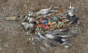 Dead Bird: