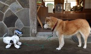 Automated dog versus its original.