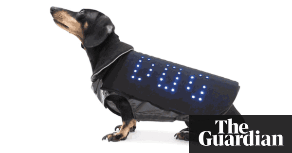 Disco Dog LED vest wants to make pet pooches sparkle at night ...