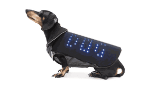"""The Disco Dog LED vest will flash """"LOST DOG"""" if an animal strays too far."""