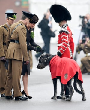 Catherine, Duchess of Cambridge attaches a sprig of shamrock to Irish Wolfhound Donal, at Mons Barracks in Aldershot