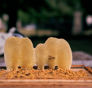 The bees have made their own wild honey comb here, this can happen when there is a space between the frames.
