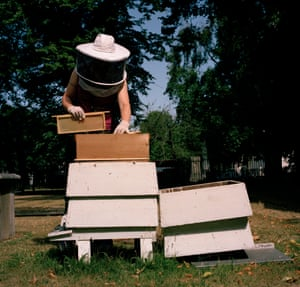 """Camilla adding a frame to one of the super's in a hive in Greenwich Mausoleum in South London.  Frames in the honey levels are in """"super"""" boxes, as the supers fill up you add more frames and these super boxes.  If honey is capped you can remove it."""